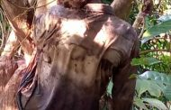 কাপ্তাইয়ে গভীর জঙ্গলে গলায় ফাঁস লাগানো অবস্থায় অজ্ঞাত ব্যাক্তির লাশ উদ্বার