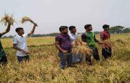 ময়মনসিংহ জেলা ছাত্রলীগ নেতা সজীবের উদ্যোগে কৃষকের ধান কাটা কর্মসূচি
