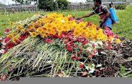 ক্রেতা শুণ্য গদখালি'র ফুলের বাজার পানির দামে বিক্রি হচ্ছে ফুল।পথে বসেছে শতাধিক ফুল চাষি